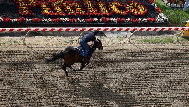 A thoroughbred works out on the track at Pimlico Race Course, site of the 140th Preakness Stakes.