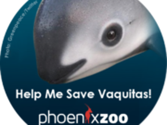 The Phoenix Zoo is contributing to a campaign to save Mexico's vaquita porpoise from extinction.