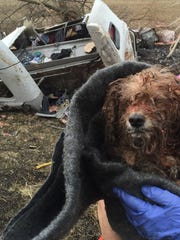 This dog was rescued from the remains of a burned semi after a crash on I-65.