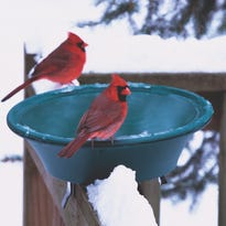 Do birds get cold feet in the winter?