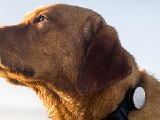 Whistle is a snap-on gadget that clings to your dog's