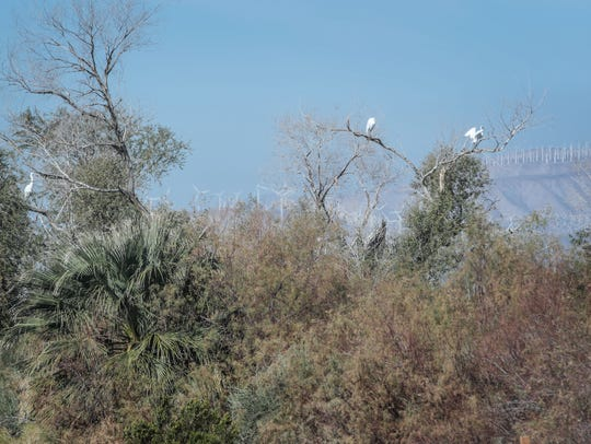 Three birds seen from the Kim Nicol Trail at Desert