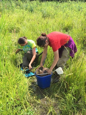 In this 2015 photo, University of South Dakota students Patricia Dombrowski, left, and Breanna Fischer collect larvae of the federally endangered Hine's emerald dragonfly at Pennybrook Pond in southwest Wisconsin.