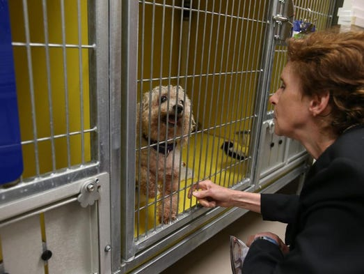 Dr. Sandra Gibney visits with dogs in their new kennels as Faithful Friends Animal Society unveils its upgraded facilities.