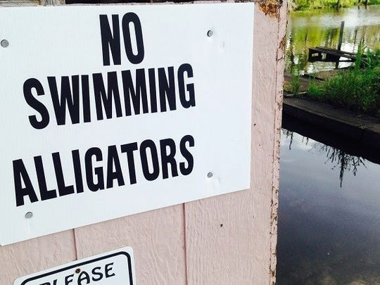After a large alligator was spotted near Burkart's