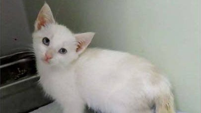 Pearl, 9 weeks old, is available for adoption at Wakulla County Animal Control.