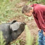 Hog wild for heritage pork: Comeback breeds appeal to today's consumers