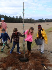 Planting a tree on Arbor Day.