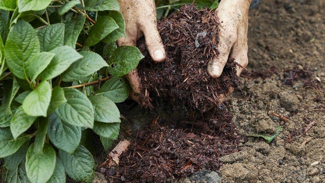 "Avoid ""bath-tubbing"" by keeping most of the original soil when planting this fall."