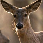 Deer season starts Wednesday; are you ready?