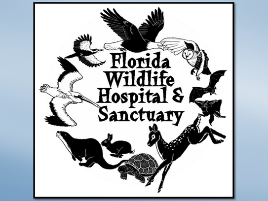 Florida Wildlife Hospital & Sanctuary