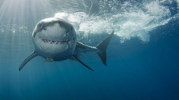 Discovery's Shark Week is celebrated by many as a national holiday.