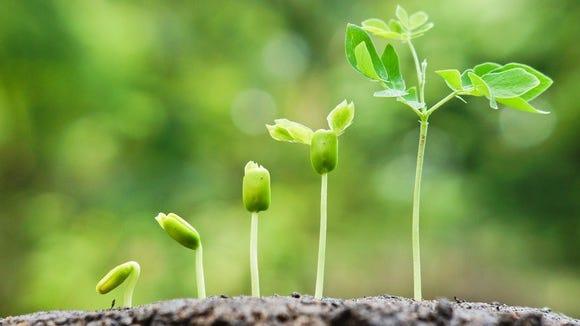Seedlings growing in succession.
