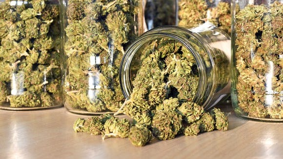 Jars filled to the brim with trimmed cannabis lined up on a counter.