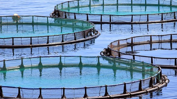 An international aquaculture company has expressed interest in possibly locating a facility in Wayne County.