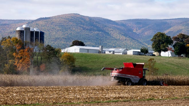 A combine harvests corn from a field along Patton Farm Road in Stuarts Draft on Oct. 17.