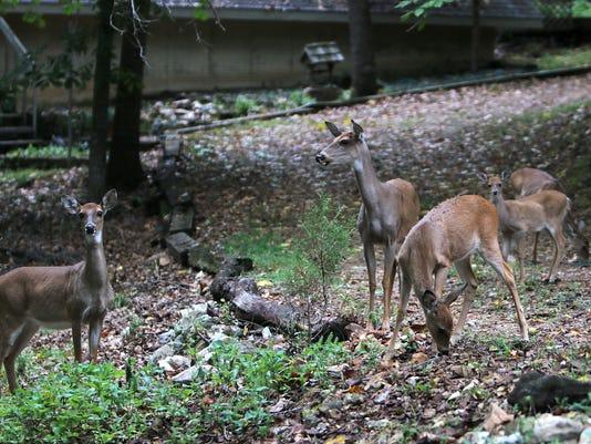 MAIN deer 007.jpg