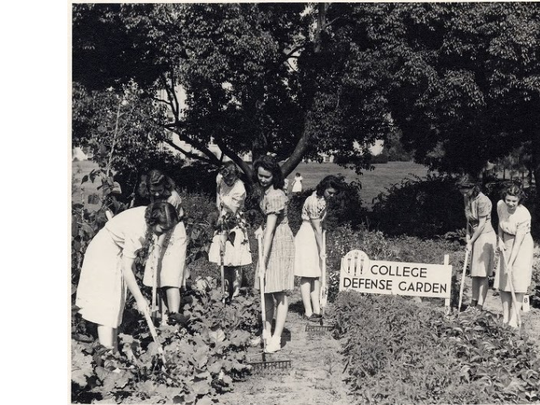 """A Tallahassee eastside residential road is named for a """"victory garden"""" that once existed on the street. Americans planted 20 million victory gardens as a show of civilian support during World War II, such as this one at then-Florida State College for Women."""