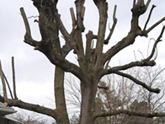 HES-SUB-123115-pruning-tree.jpg