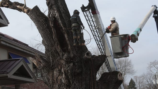 Crews cut down Sparkill's iconic white ash tree on Wednesday. The tree is believed to be more than 350 years old.