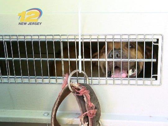 One of the dogs rescued from a New Street home in Asbury