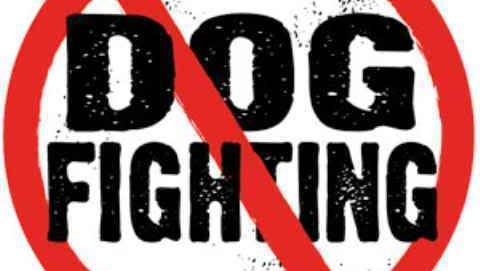 No Dog Fighting logo.