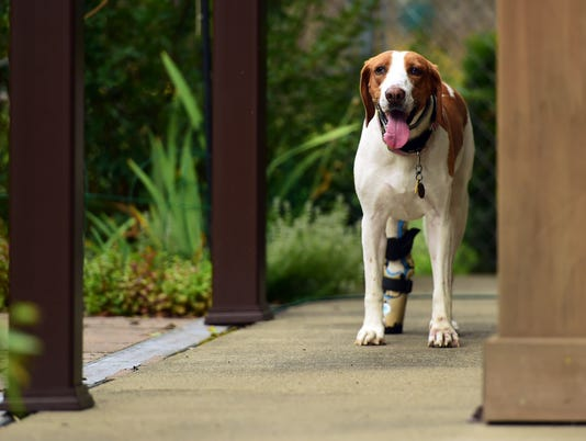 636679561110994857-20180723-dog-prosthetic-kc011.JPG