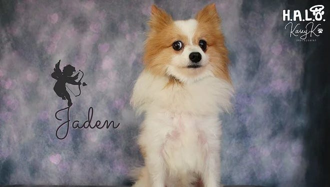I am a male Pomeranian with a nice helping of sass.