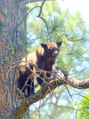 The cub kept an eye on the officers below him.