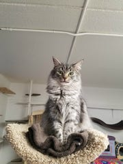 Thelma is available for adoption at Home Fur Good,