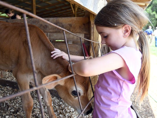 Sarah Gipson, daughter of commissioner of agriculture and commerce Andy Gipson, pets a calf at the Country Girl's Creamery in Lumberton, Miss.,