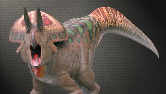 This reconstruction shows a Zuniceratops, a Jurassic horned dinosaur related to Triceratops.