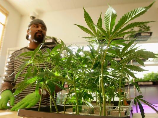 AP_Medical_Marijuana_California
