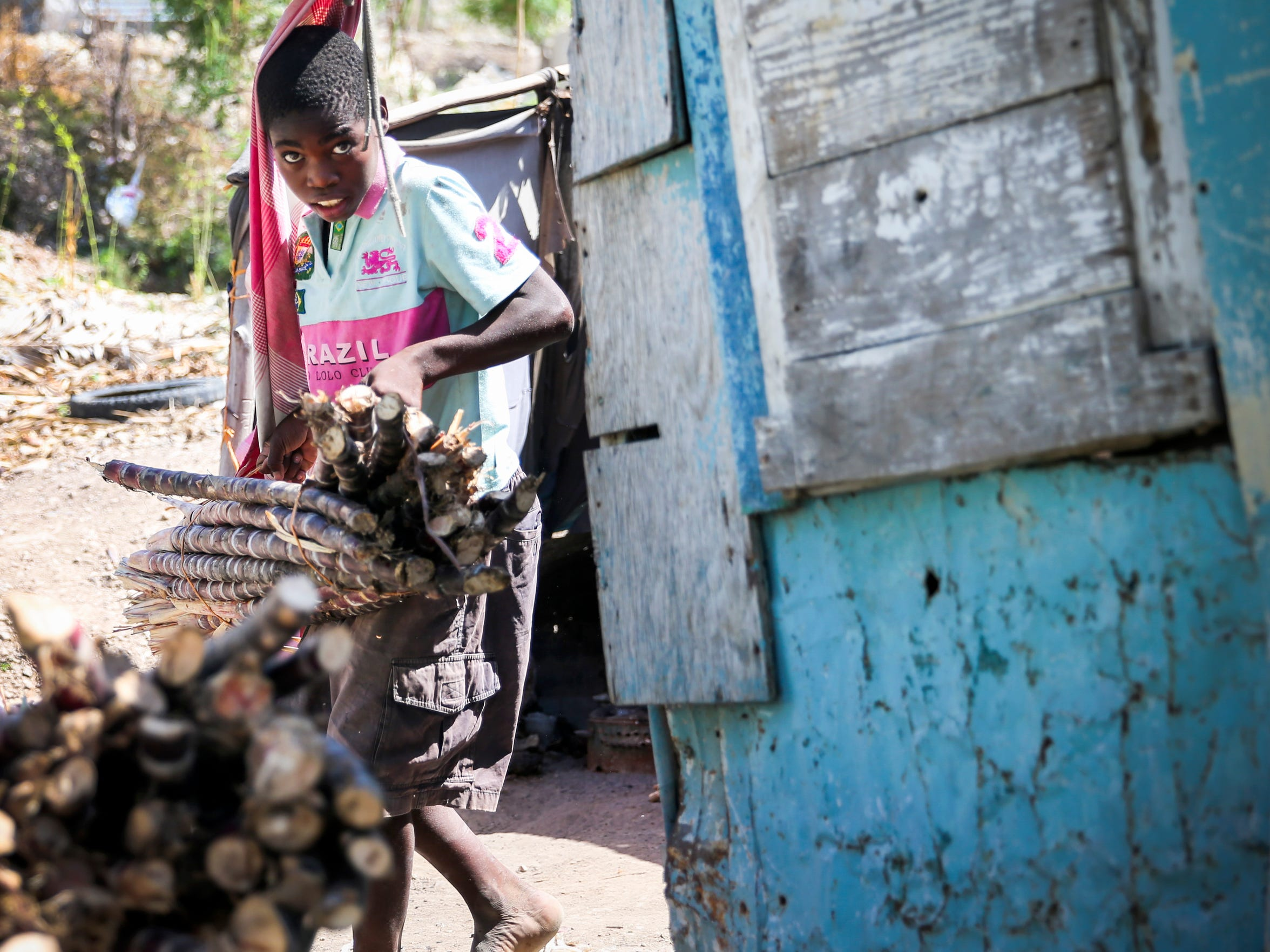 A neighbor hauls sugar cane for sale from Prospere