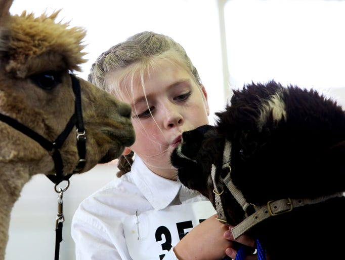 Alexandra Lelnand, 10, gives her Alpaca Sully a kiss before the junior division at the Larimer County Fair Sunday, August 3, 2014.