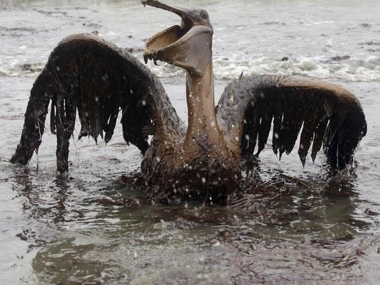 oily_pelican.jpg