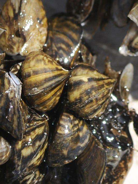Fighting zebra mussels