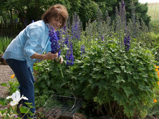 Delphiniums grow up big and are nice cut flowers