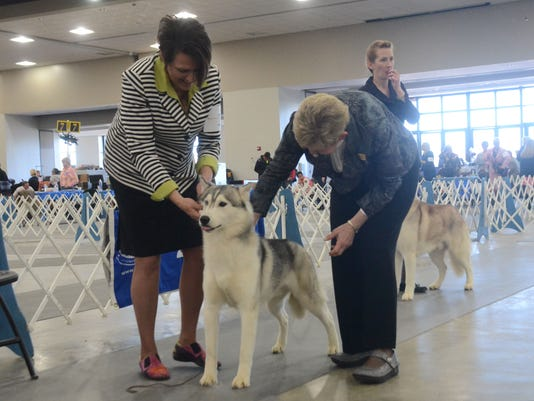 ANI Dog Show ANI Dog Show Linda More (right), an American Kennel Club judge, looks over Token, a Siberian Husky being shown by Terri Galle at the 5th Annual Mardi Gras Cluster Dog Show Sunday, Jan. 25, 2015 at the Alexandria Riverfront Center. The show was