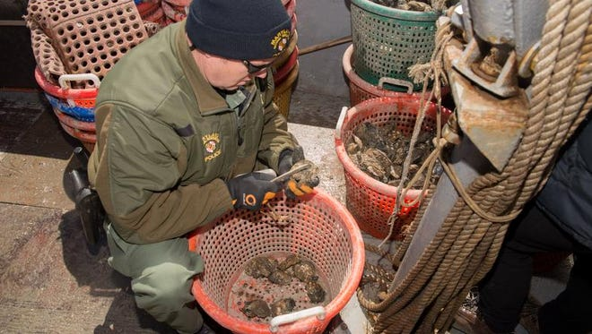 Officer Troy Brimer performs a routine inspection of an oyster harvest.