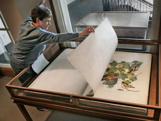 "Susan Darnell, administrative assistant of collections at the Indiana Historical Society, is shown carefully turning one of the giant pages of one of four volumes of the Audubon's ""Birds of America"" book series. The Historical Society announced on Wednesday, Dec. 18, 2013, that it will put its complete set up for auction by Sotheby's in April 2014."