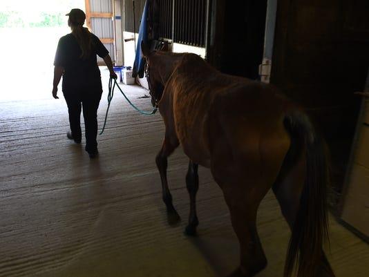 MTO horse rescuer - reva walking