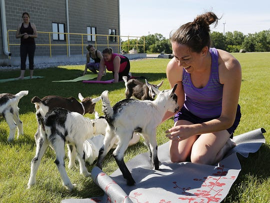 """Myrra Windau of Brookfield interacts with baby goats during her """"goat yoga"""" class June 17 at LaClare Farms."""