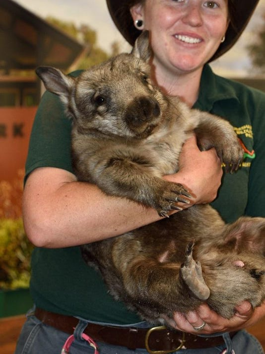 Wombat and Handler