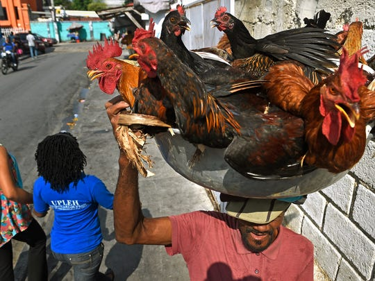 Andre Paul carries indigenous chickens from a Port-au-Prince