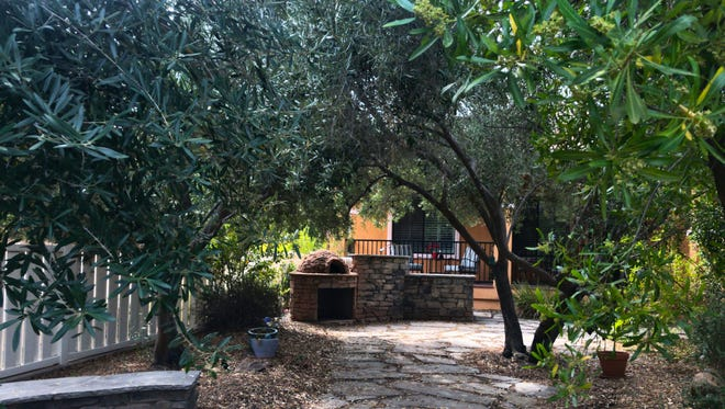 Joe and Cindy opted for a low maintenance back yard and planted olive trees to provide shade.