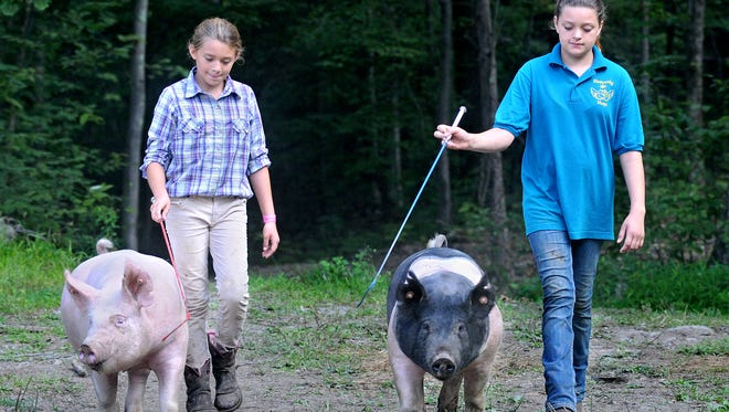 Jessica Burns, left, 11, and her sister, Autum, 13, both of Hyde Park, lead their pigs up a path in preparation for showing them at the Dutchess County Fair. Wilma, left, a Yorkshire, and Zebra, a Hampshire-cross, each weigh about 250 pounds.
