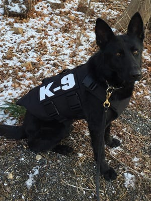 Axel, a Harrison Police K9, sports a new protective vest donated by a national charity.