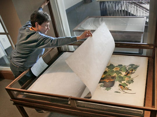 Susan Darnell, Administrative Assistant of Collections, carefully turns one of giant pages of one of four volumes of the huge Audubon,s Birds of America. On display at the Indiana Historical Society. Each day they turn a page to a different illustration of a bird. 2009 file photo