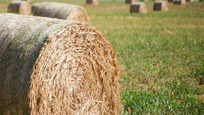 Hay operation resilience and flexibility during tough economic times will highlight the 2017 Southwest Hay & Forage Conference Jan. 11-13 at the Ruidoso Convention Center in Ruidoso.